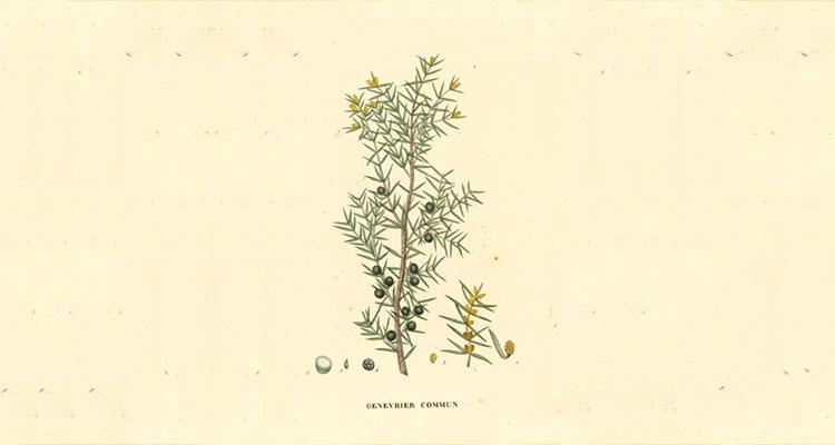 Juniper Martini 22